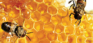 Méhészeti nap
